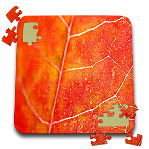 Yves Creations Colorful Leaves - Orange Leaf - 10x10 Inch Puzzle (pzl_36747_2)