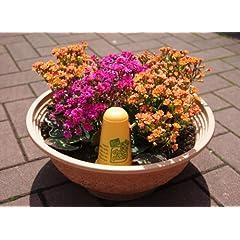 植物用ジェル状蒸留水
