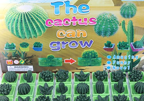 THE CACTUS CAN GROW, Set of 6