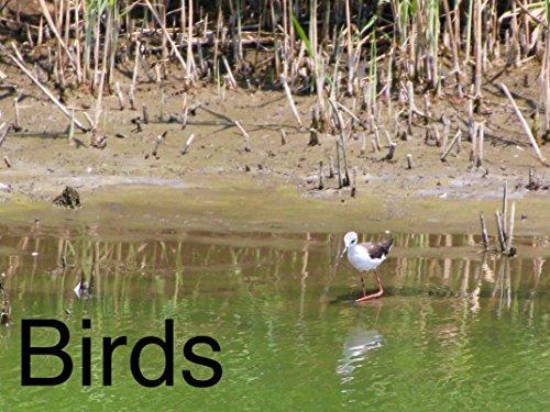 Clip: Birds - Season 1