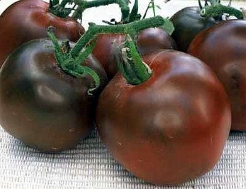 Black Prince Tomato 15 Seeds Heirloom