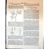 La Propagación Planta el Jardín 1878 de las Raíces de las Rosas de los Cortes de las Hojas
