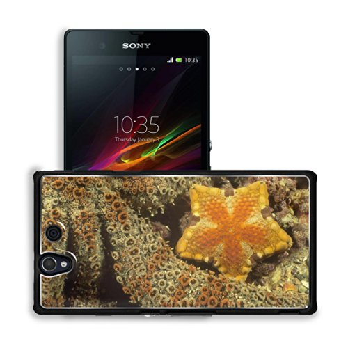 Starsfish Marine Coral Reef Underwater Sony Xperia Z 5.0 C6603 C6602 Snap Cover Premium Aluminium Case Customized Made To Order Support Ready 5 4/8 Inch (140Mm) X 2 7/8 Inch (73Mm) X 7/16 Inch (11Mm) Luxlady Sony Xperia Z Cover Professional Xperia_Z Cases