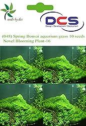 DCS (048) Spring Bonsai aquarium grass 10 Seeds Novel Blooming Plant-16