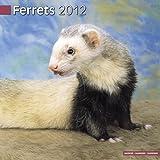Avonside Publishing Ferrets