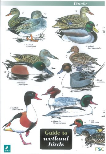 Wildlife-World-Wetland-Birds-Field-Guide