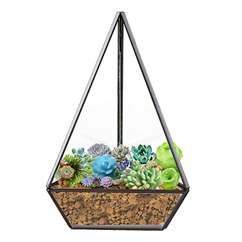 HOMEIDEAS Clear Glass Pyramid Tabletop Succulent Plant Terrarium Box / Decorative Air Plant & Cacti Holder Case 4.3 x 4.3 x 8.3 Inches(black) (Pyramid Glass Display Case compare prices)