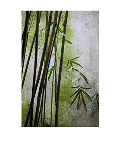 CM Creation Cuadro Decoplex 50X70 Plantas