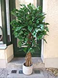 Künstlicher French Ficus mit Multistämmen 1,75m