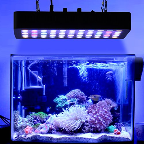 Galaxyhydro led 55x3w dimmable 165w full spectrum led for What saltwater fish are in season now