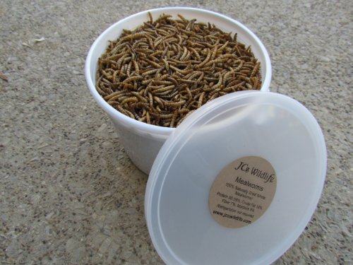 Roasted Dried Mealworms 12000 Approx 12Oz Blue Birds Gliders Fish Reptile Freeze