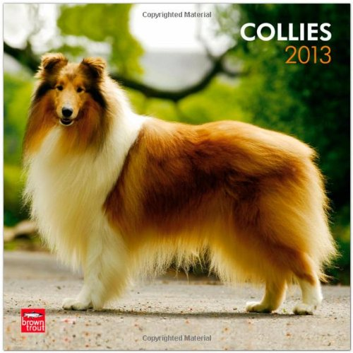 Collies 2013 Square 12X12 Wall Calendar (Multilingual Edition)