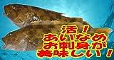 「アイナメ 約2Kg 1尾」お刺身用 あいなめ  【遊廊亭】