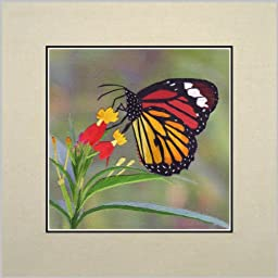 King Silk Art 100% Handmade Embroidery Feng Shui Colorful Butterfly on a Fuchsia Chinese Print Unframed Wildlife Butterfly Painting Gift Oriental Asian Wall Art Décor Artwork Tapestry Hanging Picture Gallery 33016WG