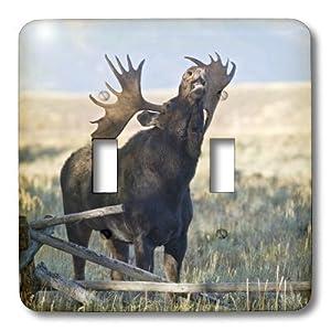 3dRose  lsp_97421_2 Wyoming, Grand Teton National Park, Bull Moose Us51 Jwi0374 Jamie & Judy Wild Double Toggle Switch