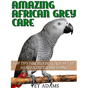 Amaazing African Grey Parrot Care