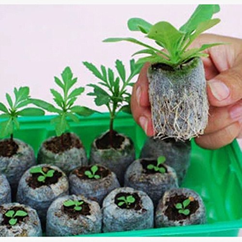 2-insiemi-lotto-30pcs-25-millimetri-di-torba-di-impianto-di-taglio-forniture-giardino-avviamento-di-