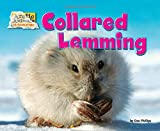 img - for Collared Lemming (Arctic Animals: Life Outside the Igloo) book / textbook / text book