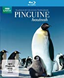 Pinguine Hautnah [Blu-ray]