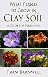What Plants to Grow in Clay Soil: A Guide for Beginners (What Plants Grow Where)