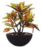 Fourwalls Artificial Dracaena Bonsai Plant in Ceramic Vase (24cm, Multicolour)