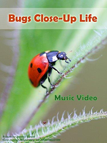Bugs Close-Up Life