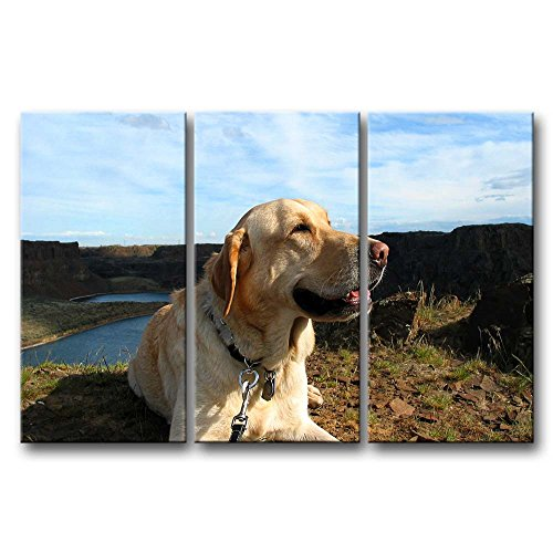 3 Panel Wall Art Painting Golden Retriever Up Ahead In The Distance Prints On Canvas The Picture Animal Pictures Oil For Home Modern Decoration Print Decor For Kids Room