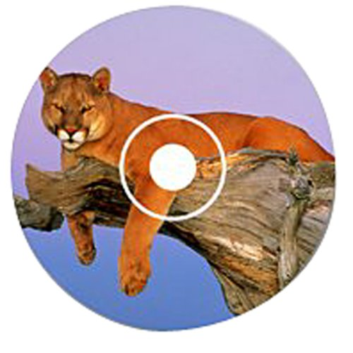 Wild Cats (Jewel Case)