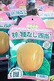果樹苗 接木 柿 種なし西条 1年生 【送料込価格】