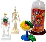 人体モデルキット