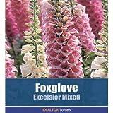 De Ree Foxglove Excelsior Mixed Garden Flower Plant 2200 Seeds