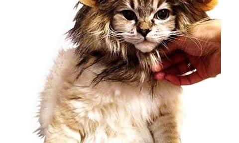 【 可愛さ 超 アップ 】 愛 犬 愛 猫 用 ウィッグ