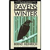 Ravens in Winter ~ Bernd Heinrich