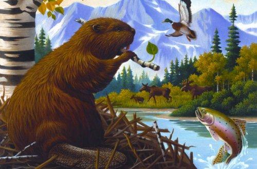 Cobble-Hill-Beaver-Lookout