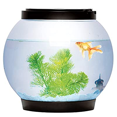 Sentik® 5 Litre Glass Fish Bowl With 2 LEDs (Black)