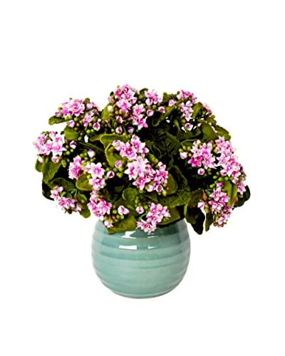 Creative Displays Inc. Variegated Kalanchoe Ceramic Pot, Pink/Aqua
