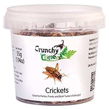 Crickets - 55 grams