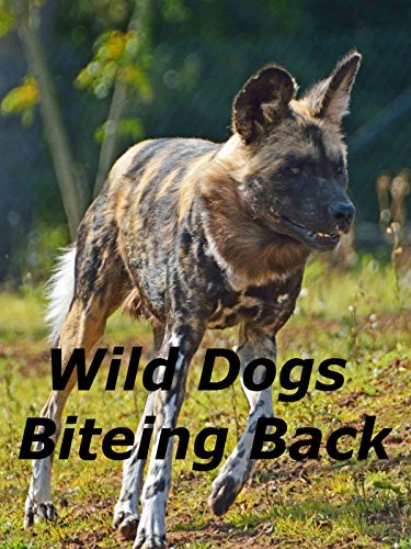 Wild Dogs Biteing Back