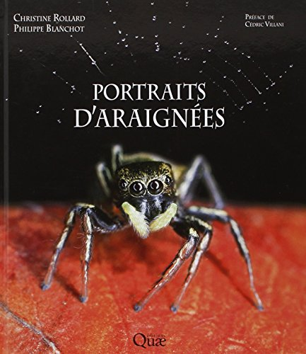 portraits-daraignees