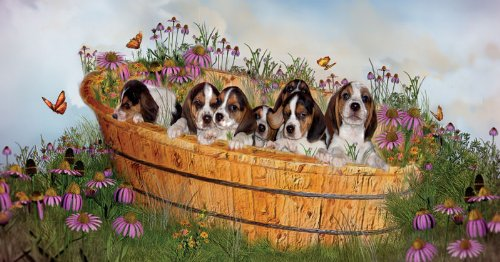 Growing Puppies