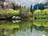 Forest and Lake, Jeonnam, Korea by Topic Photo Agency - fine Art Print on PAPER : 69 x 52 Inches