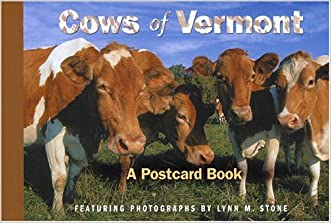 Cows of Vermont (Postcard Books)