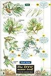 Tree Name Trail: A Key to Common Tree...