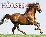 Just Horses 2014 Wall Calendar