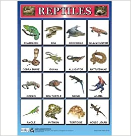 Pics For > Reptiles Chart