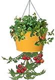 HIT 8399E SAFF Galvanized Heavy Gauge Steel Hanging Tomato Herb Planter, 13.5 by 8-Inch, Saffron