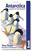 Antarctica Wildlife 5th (Bradt Guides)