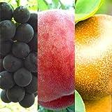 旬のフルーツ産地直送お取り寄せ訳ありグルメ旬の果物、ぶどう、桃、梨、わけあり激安グルメ3品福袋セット ランキングお取り寄せ