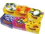 6 Mini-Pflanzset 'Blüten'