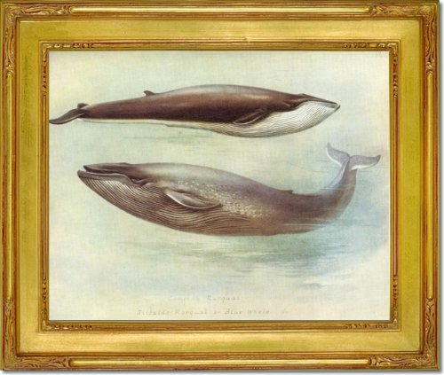Wooden Whale Wall Art front-1051543